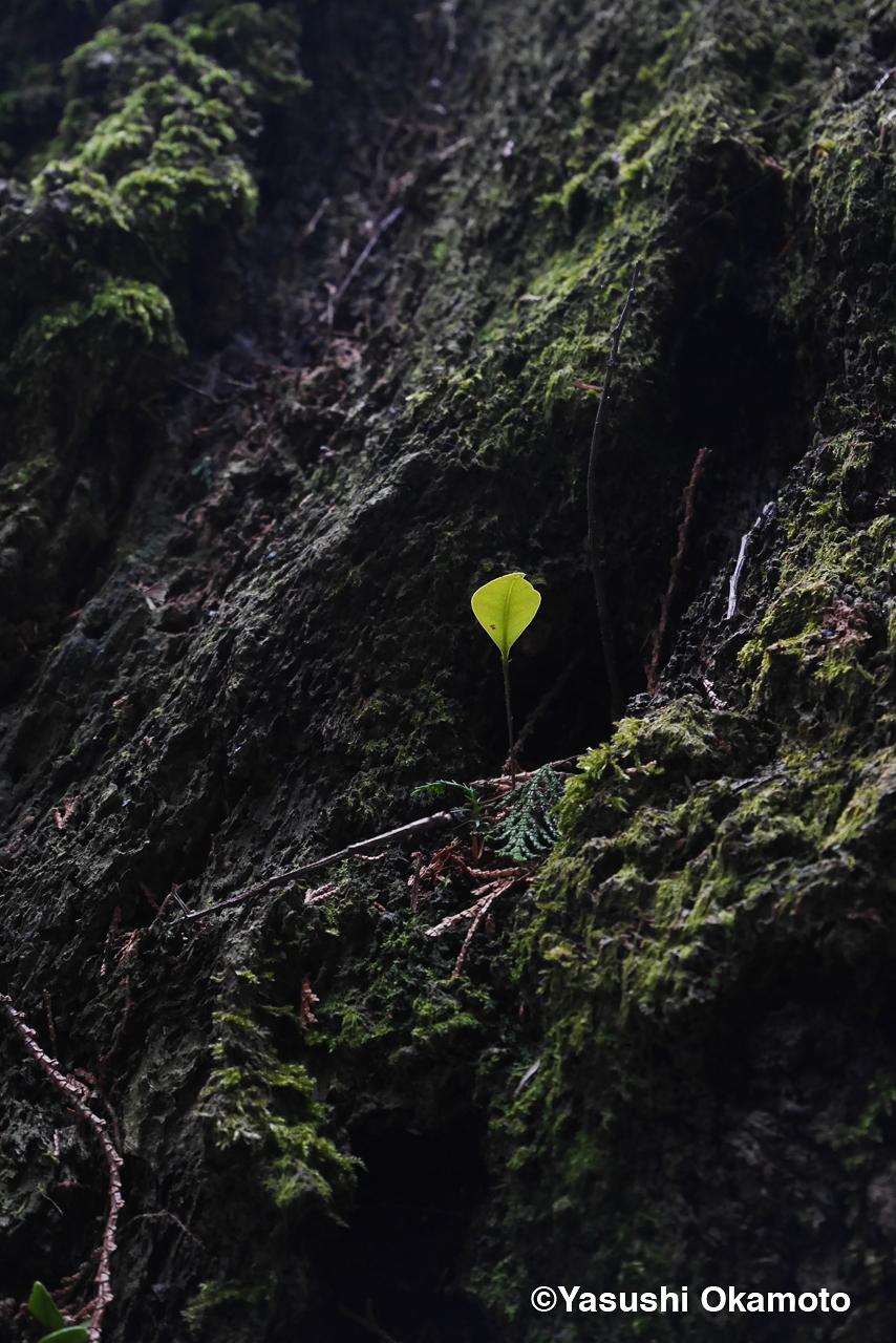 a small leaf
