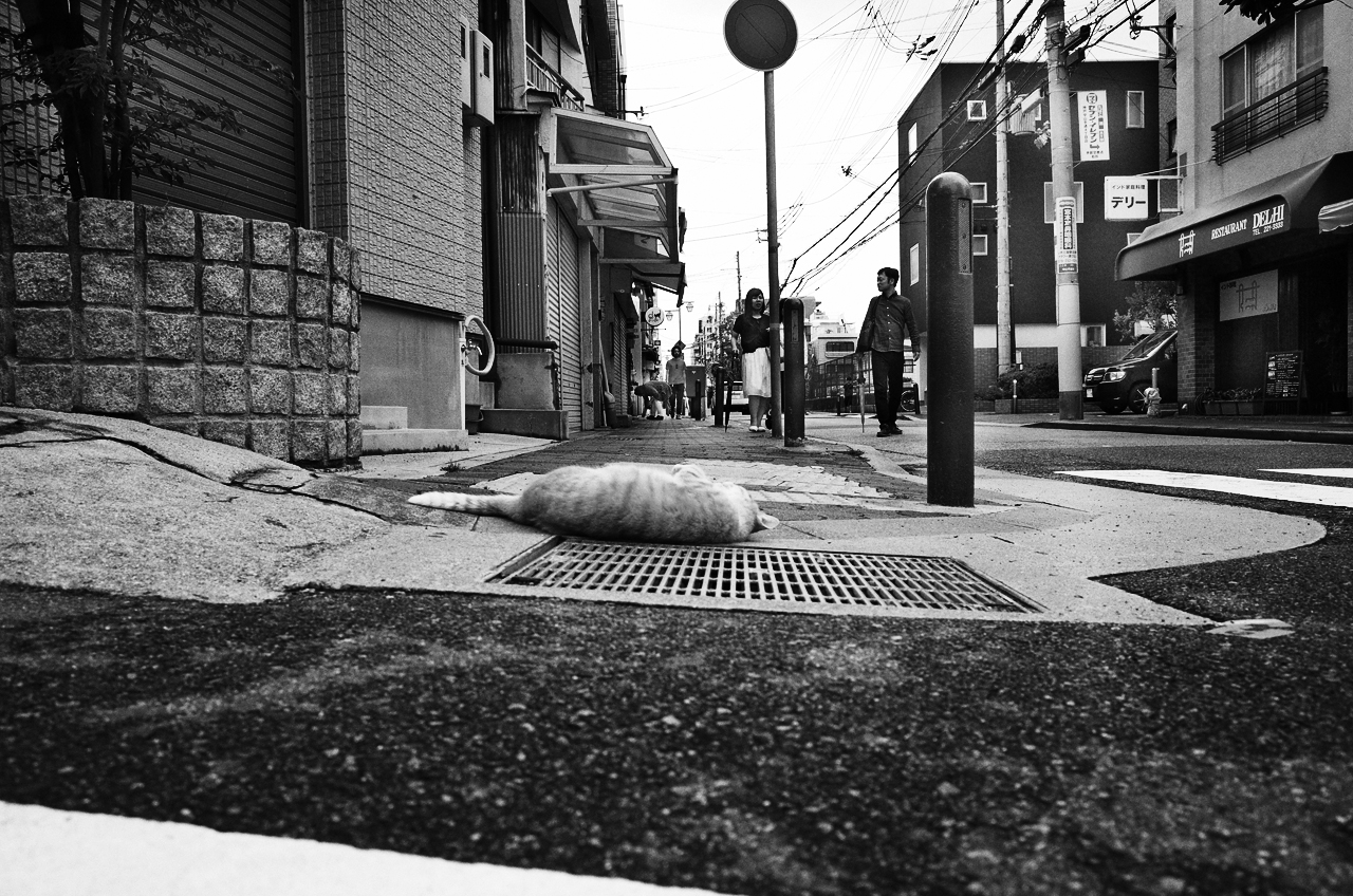 a stray cat