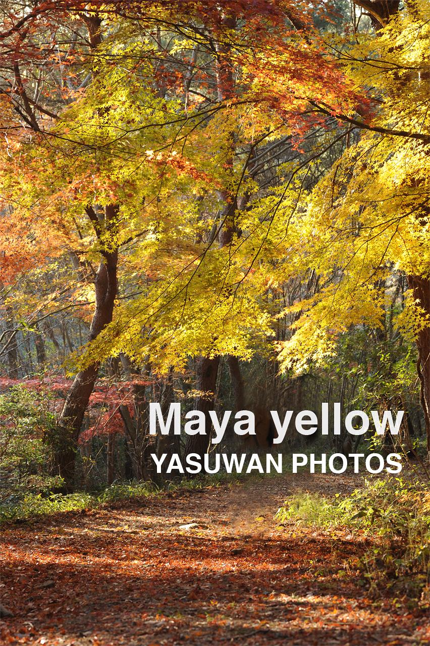maya yellow